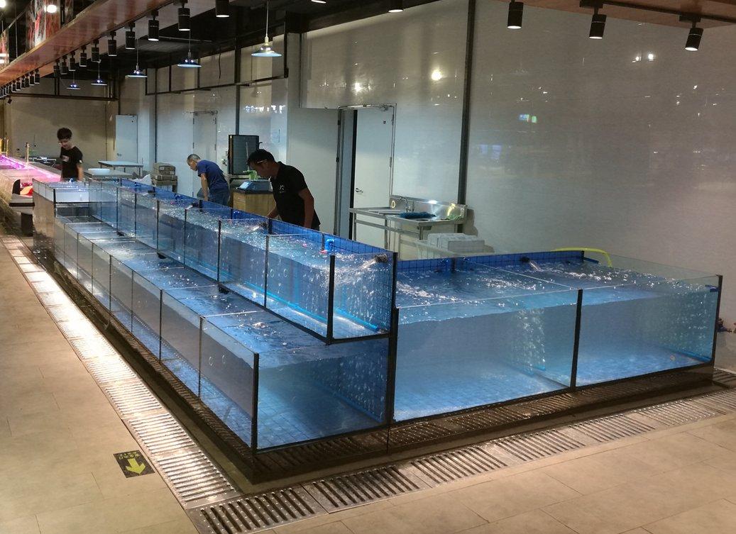 海鲨水族工厂浅谈观赏鱼饲养的起源